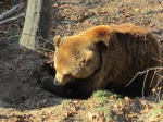 Bern Bear, Bern, Switzerland