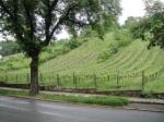 Grinzing Vineyards, Vienna, Austria