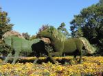 Canada - Montreal - The Man who Planted Trees' horses