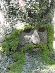 Face of man on a tree trunk