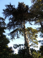Japanese Botanical Garden, Golden Gate Park