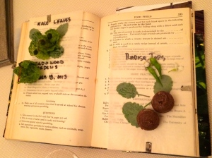 fresh herbs and beet macaroon served on the open pages of a botanical garden book