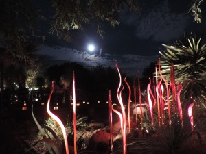 With a little help from the moon, the Chihuly red Christmas Spires light up the Desert Botanical Garden in Phoenix