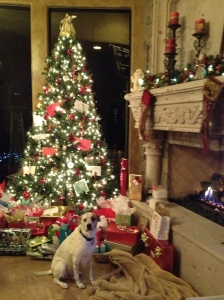 Rescue dog Eli sits by the Christmas Tree waiting for Santa to come