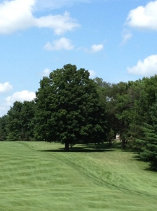 """The lush green fairways and thick trees that line Northfield Golf Club, Northfield, MN - """"The Money Tree"""""""