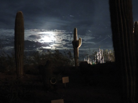 Moon rising over the Saguaros at the Desert Botanical Garden