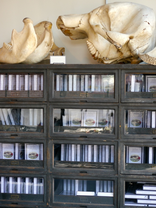 One of many bookcases at the Morbid Anatomy Museum and Library, offering insight into the subject of death
