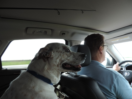 Eli helping Dad navigate the roadways from Phoenix to Kansas City