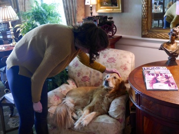 Nicky, the Inn Mascot enjoying a nice pat on the head while sitting in her favorite chair.